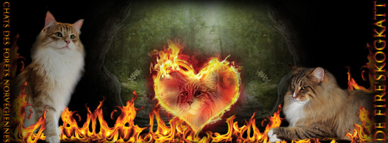 CHATTERIE DE FIRE'SKOGKATT